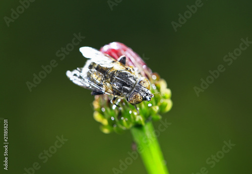 Foto op Aluminium Macrofotografie The gadfly, taken in the wild
