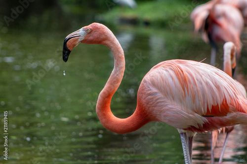 Foto op Aluminium Flamingo Charming flamingos