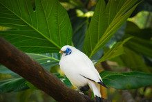 White Bird Hong Kong
