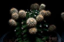Green Cactus Desert Plant Desert. Collection Houseplant Decoration Garden