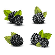 Realistic Detailed 3d Blackberries With Green Leaves Set. Vector
