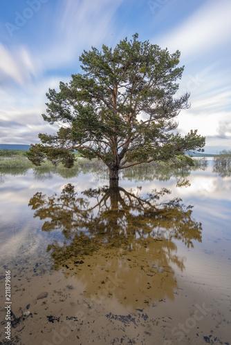 Tree in swamp of Cuerda del Pozo (Vinuesa, Soria - Spain).