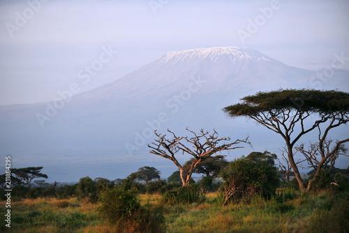 Poster Afrique Kenya. Dry trees in the savannah at dawn