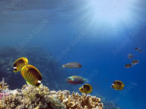 Underwater scene. Coral reef.