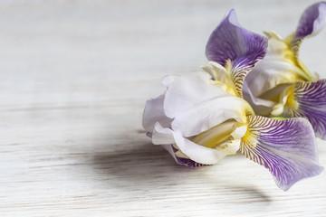 Image with iris.