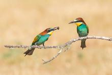Bright Birds Sitting On Branch