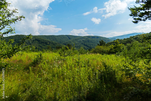 Tuinposter Blauw a tall young grass and wildflowers on the green wooded hills of the mountains and a blue cloudy sky. place of rest and tourism