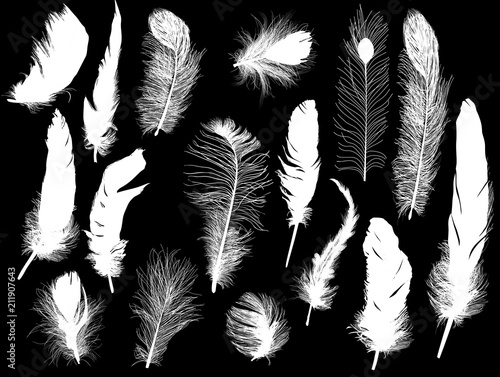 sixteen white feathers collection on black