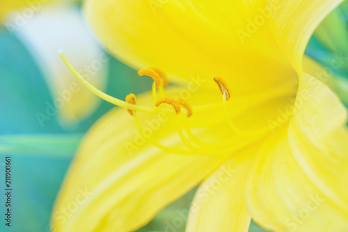 Staande foto Macrofotografie Spring flowers on blurred macro background. Spring or summer border template with copy space. Romantic greeting card. Blooming flowers on sunny day. Flowering springtime. Spring background