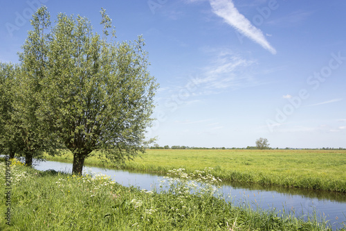 Canvas Print View on fresh scenic polder landscape in the Netherlands with willows, green gra