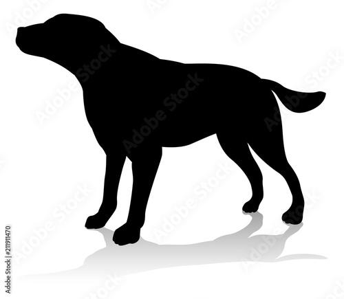 Photo Dog Pet Animal Silhouette