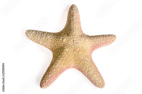 Seestern Asteroidea Meer Meeresbewohner