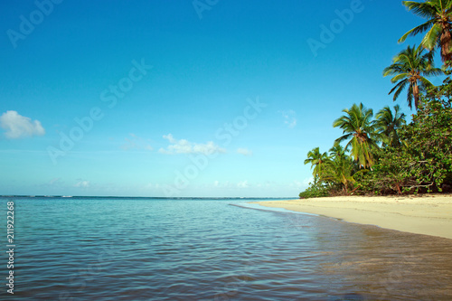 Foto op Canvas Strand Green palm trees on caribbean beach.