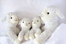 Sheep Family Lying In The Bed