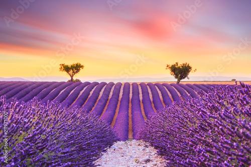 Foto op Aluminium Snoeien Beautiful sunset lavender field