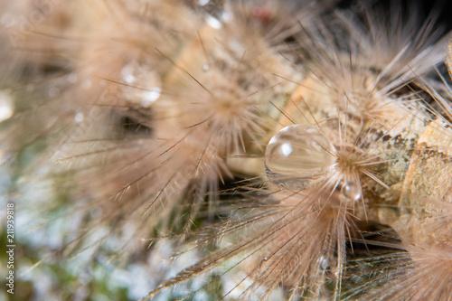 Tuinposter Macrofotografie Macro drops of water on fur