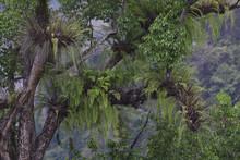 Giant Ferns Rainforest