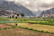The Vegetable Fields Of Almolo...
