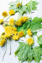 Cut Yellow Dandelions And Leaves