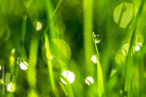 Carta da parati Drops of dew on the beautiful green grass, background close up