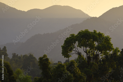 Tuinposter Landschappen Landscape of a rainforest China