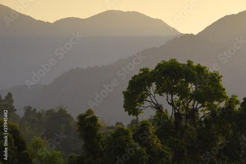 Foto op Plexiglas Landschappen Landscape of a rainforest China