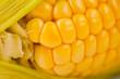 Corn bright juicy vegetarian shot over white background