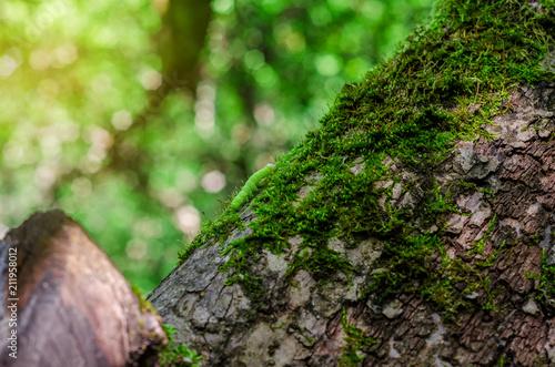 Photo  small green caterpillar crawls along the tree