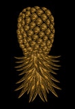 Black background with golden pineapple - 211962219