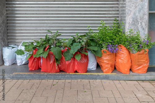 Photo  Plants Delivery