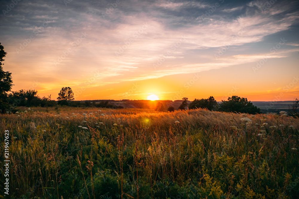 Fototapety, obrazy: Beautiful summer sunset with waving wild grass in sunlight, rural meadow or field in countryside