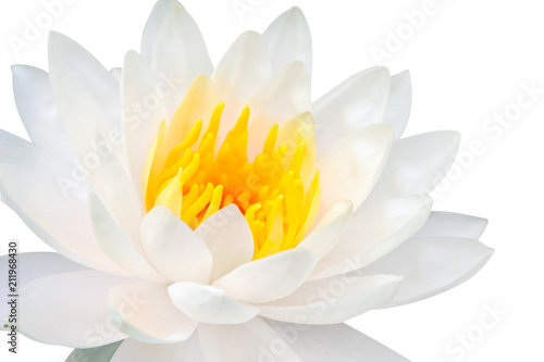 Poster de jardin Nénuphars beautiful close up white lotus flower isolate