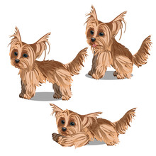 Set Of Cartoon Animated Yorkshire Terrier Puppy Isolated On White Background. Vector Cartoon Illustration Close-up.