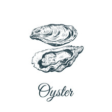 Oyster Sketch Vector Illustration.