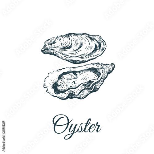 Fotografija Oyster sketch vector illustration.