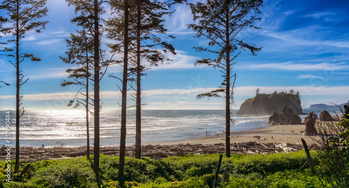 Fotografie, Obraz  Ruby Beach landscape with some silhouetted conifers in the foreground on a sunny day, Olympic National Park, Washington state, USA