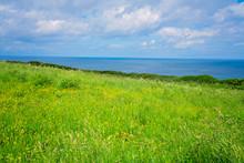 Green Rural Cornish Hillside Meadow