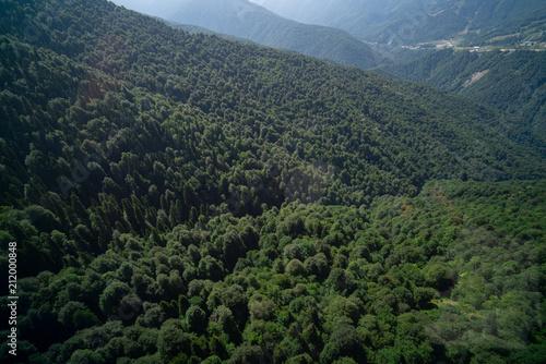 Deurstickers Zwart dense forest