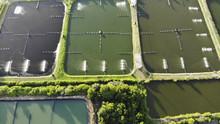 Aerial View Of Shrimp Farm And...