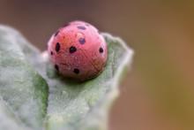 Ladybug Sitting On The Plant W...