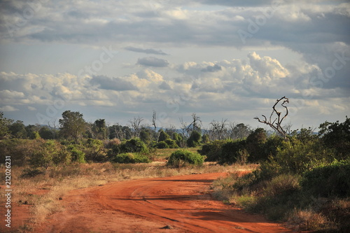 Landscapes of the Kenyan savannah