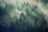 Fototapeta Las - Misty landscape with fir forest in hipster vintage retro style