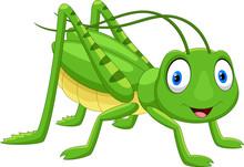 Cute Grasshopper Cartoon Isola...