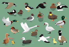 US Ducks Cartoon Vector Illust...