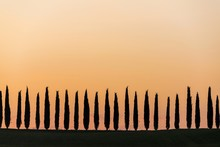 Silhouette Of Cypress Trees Against Clear Sky During Sunrise
