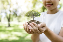 Save World And Innovation Concept, Girl Holding Small Plant Or Tree Sapling Are Growing Up From Soil On Palm With Connection Line And Glove Around