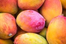 Backround Of New Harvest Mango...