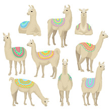 Graceful White Llama Set, Alpaca Animal In Ornamented Poncho Posing In Different Situations Vector Illustrations On A White Background