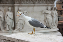 Crying Seagull With A Bas-reli...