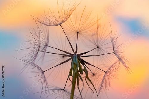dmuchawiec kozibród na tle kolorowego nieba w ostatnich promieniach zachodzącego słońca - 212070073